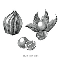 Golden berry vintage engraving isolated on white vector