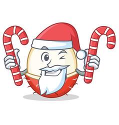 Santa with candy rambutan mascot cartoon style vector