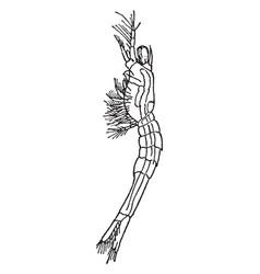 Schizopod vintage vector