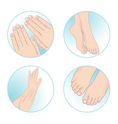 beautiful female hands feet manicure pedicure vector image vector image