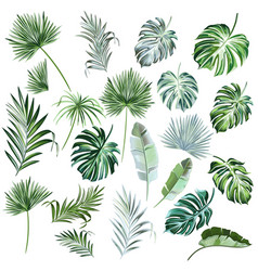 Big collection hand drawn colored palm leaves vector