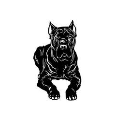 Cane corso dog - lying cane corso stock vector