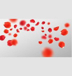falling red rose petals vector image