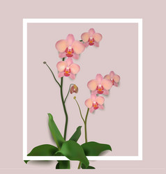 flower orchids rose vector image