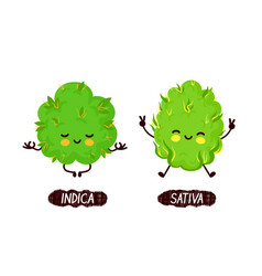 Happy cute smiling indica and sativa weed bud vector