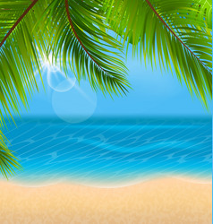 natural background with palm leaves and beach vector image