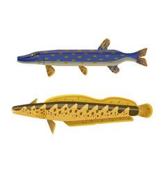 Predator fish and catfish vector