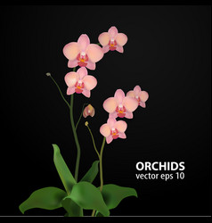 Flower orchids rose vector
