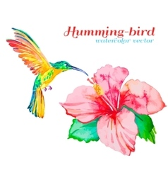 Hummingbirds and hibiscus Tropical flower and vector