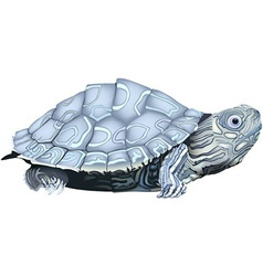 Map Turtle vector