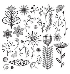 nature collection with flowers branches and vector image