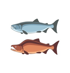 Fish salmon vector