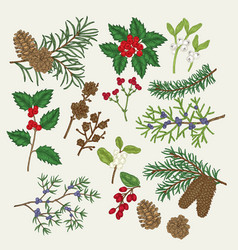 Hand drawn christmas plants holly vector