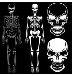 set of skeletons and skulls vector image