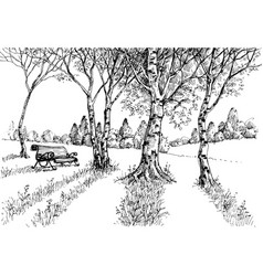 garden in the sunlight drawing a bench in the park vector image