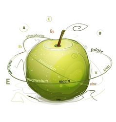 Apple vitamins and minerals vector image
