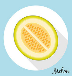 Muskmelon with long shadow vector image