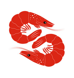 Shrimp on white vector