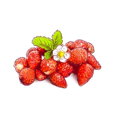Wild strawberry with flower Sketch with watercolor vector image
