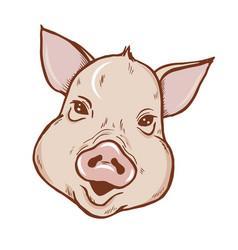 piglet portrait vector image