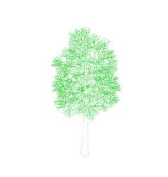 Aspen tree isolated on white background outline vector