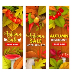 autumn sale fall season discount price offer vector image