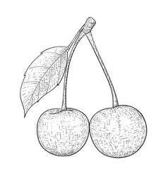 Cherries hand drawn sketch vector