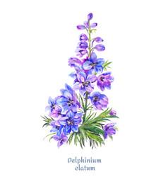 delphinium watercolor blue larkspur vector image