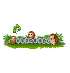 hedgehog enjoy the garden vector image