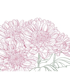 Line pink chrysanthemum background vector image