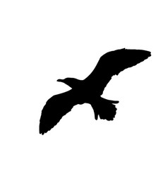 Seagull silhouette on white vector