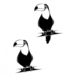 funny toucan vector image vector image