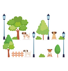 group of dogs in park vector image