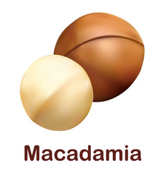 macadamia icon realistic style vector image