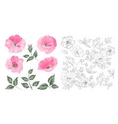 vintage poppy set wedding flowers bundle flower vector image