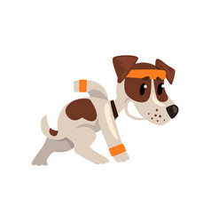 cute funny jack russell terrier athlete character vector image