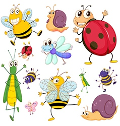 A group insects vector