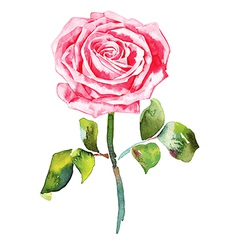 Hand draw ornate romantic watercolor rose vector