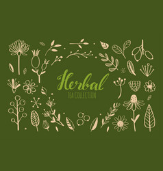 herbal tea and floral doodle set 1 vector image