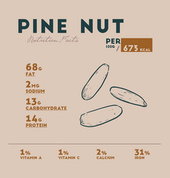 Nutrition facts pine nut hand draw sketch vector