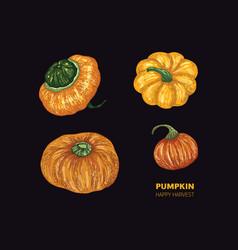 pumpkin on black background color vector image