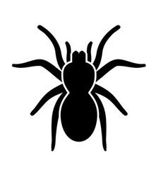 spider or tarantula vector image