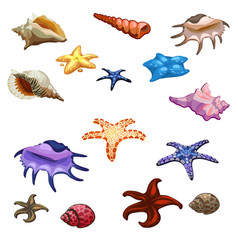 different colored mollusks shells and starfish vector image vector image
