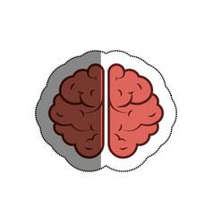 brain human isolated icon vector image