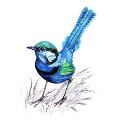 Blue bird in the grass Watercolor vector image