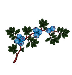 blue blueberry bush with green leaves isolated vector image