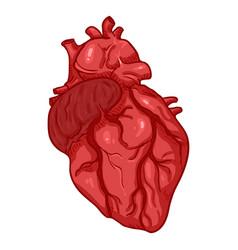 Cartoon human heart anatomical organ vector