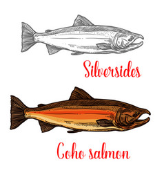 coho salmon fish sketch of marine animal design vector image