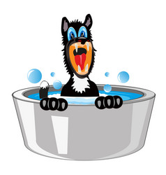 Dog is washed in basin vector