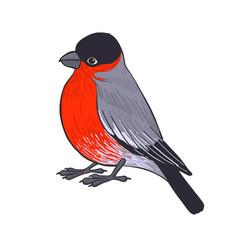 drawing bullfinch vector image